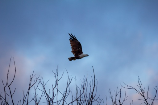Super stoked I was fortunate to get this shot with the kite in flight.
